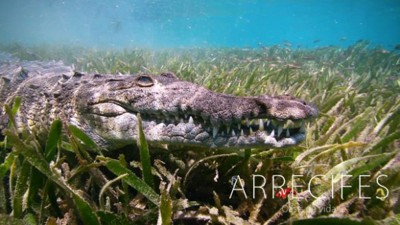 arrecifes_cocodrilo